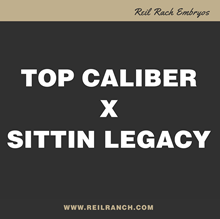 Top Caliber x Sittin Legacy